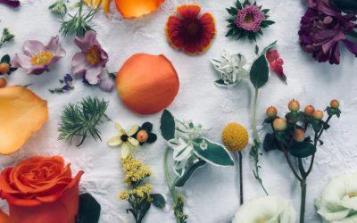Konventionelle Kosmetik vs. Natur- und Biokosmetik